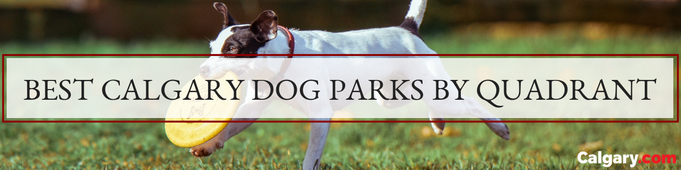The Best Dog Parks in Each Quadrant in Calgary