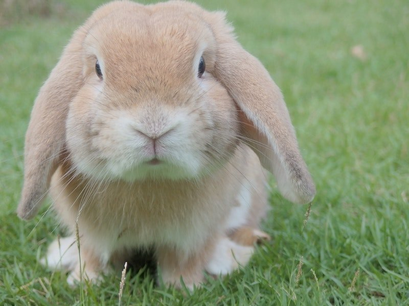 Foster a Rabbit For Easter in Calgary